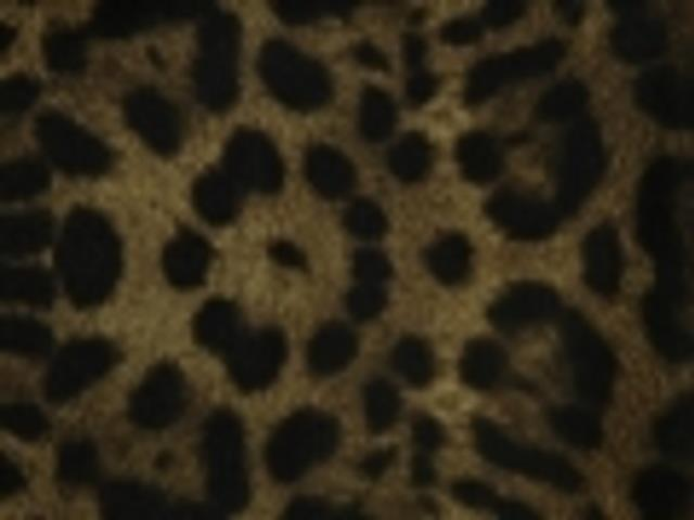 Where to find CHEETAH PRINT LINEN in Denver